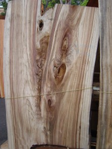 Camphor Laurel Slab