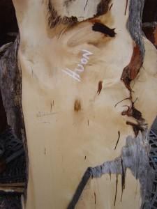 Huon Pine Slab